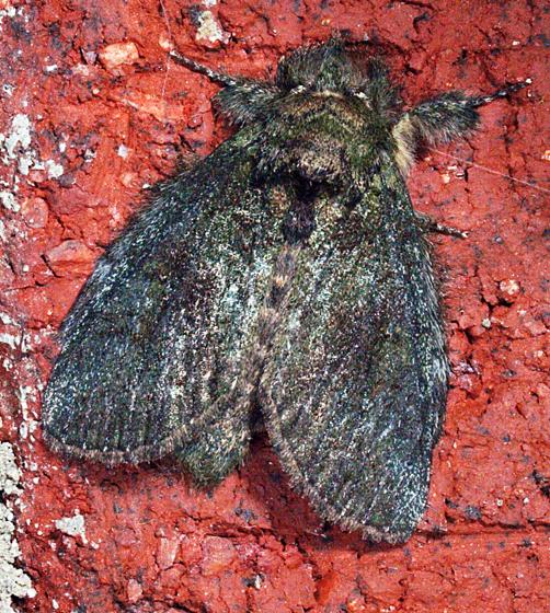 Moth to porch light