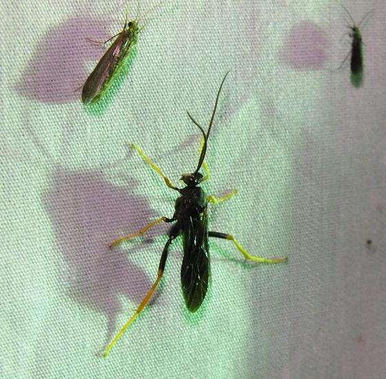 Wasp and caddisflies