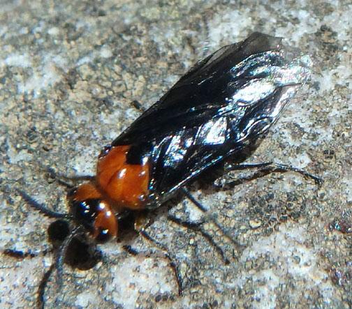 Sawfly July 23