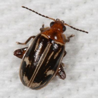 beetle - Ora troberti