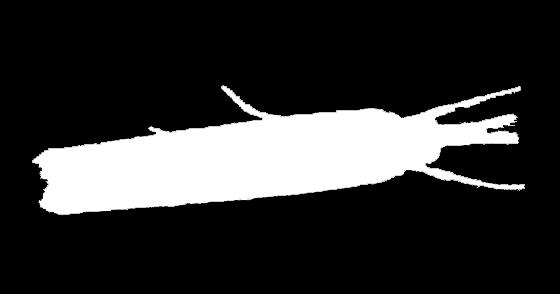 Crambid Moth Silhouette 2
