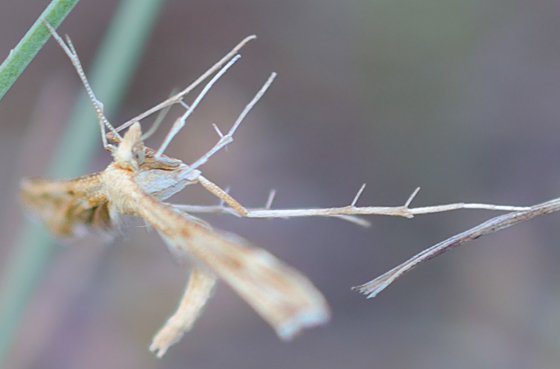 Upside-down moth