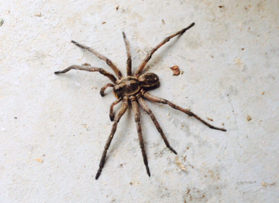 What draws in spiders to your home and what to do with them?