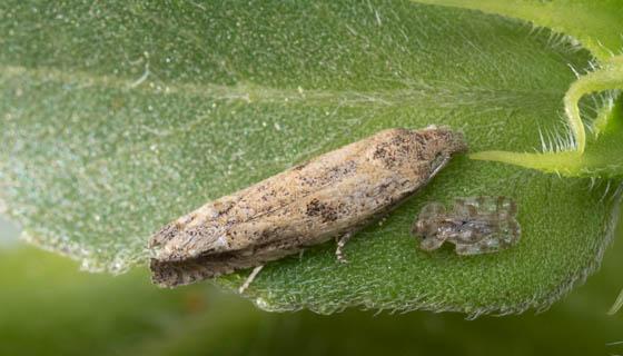 moth ID