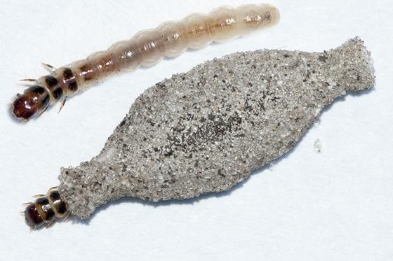 Larva in sand cocoon - Phereoeca uterella