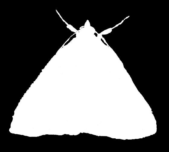 Owlet Moth Silhouette 1
