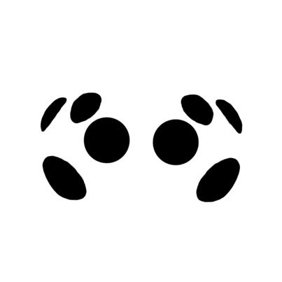 Ummidia Eye Arrangement - Ummidia