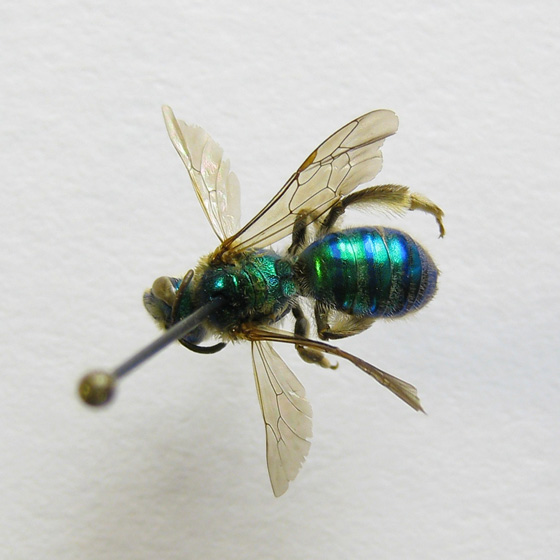 Ultra-basic studio bug photography