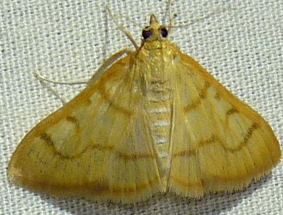 7/29/18 moth