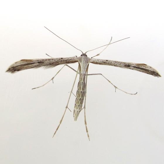 moth - August 5