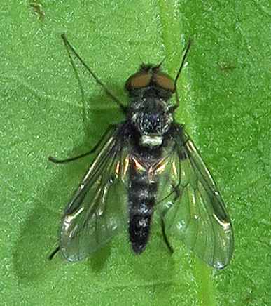 Stiletto Fly? - male