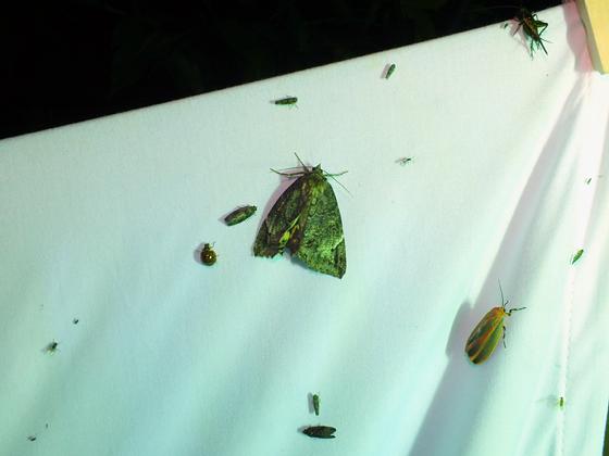 Bug hunting at night