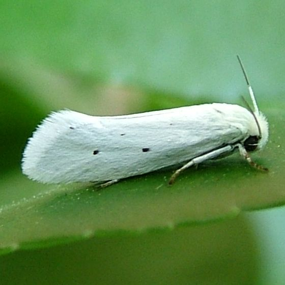 Small White Moths In House – Quotes of the Day