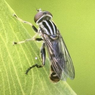 Fly? - Lejops