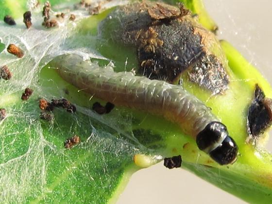 caterpillar - July 17
