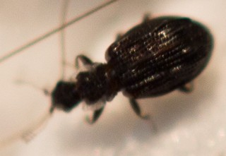Small Black Beetles In Bathroom Shapeyourminds Com