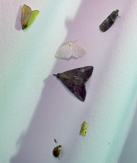 Array of flying insects