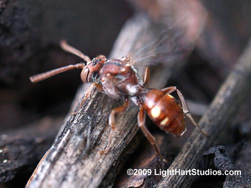 Wasp of some sort? - Nomada - female