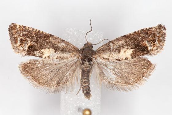Micro Moth G