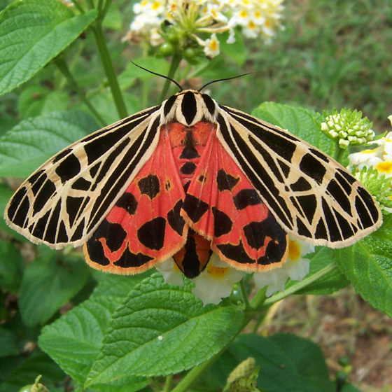 Pardon My Perspective May 2013: Underwing Species? Found In NC Around May On