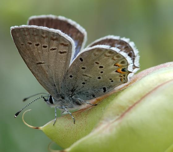 farmapest kelebek resimleri ile ilgili görsel sonucu