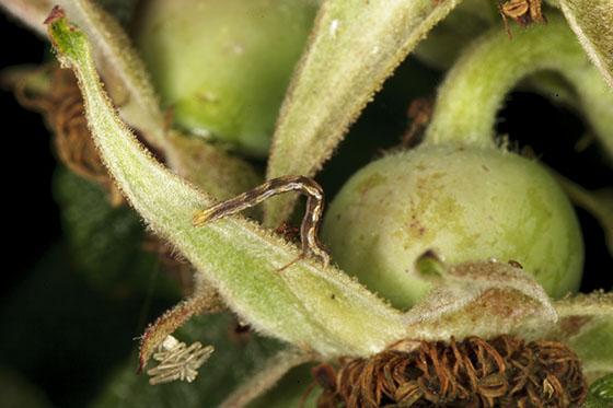 Caterpillar IMG_1857
