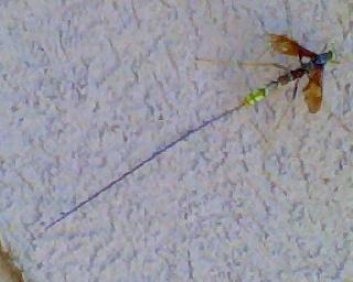 crazy looking bug - Megarhyssa macrurus - female