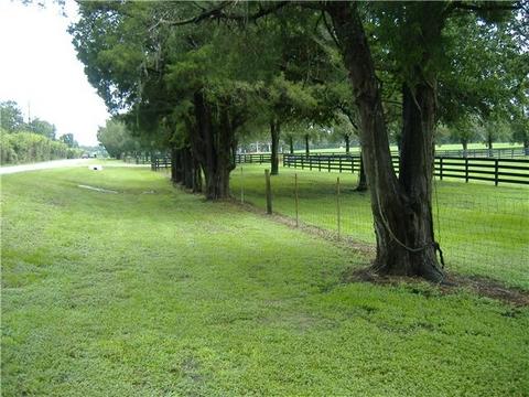 HABITAT & Preferred HOST TREE - Neotibicen latifasciatus