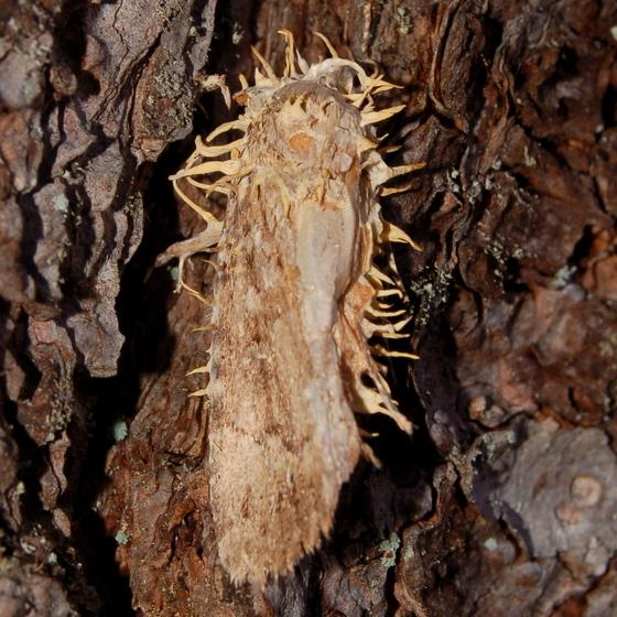 Fungus victim