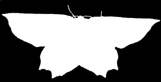 Geometrid Silhouette 2