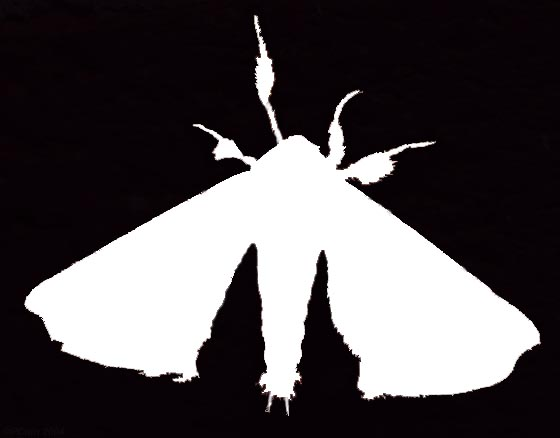 Silkworm Moth Silhouette