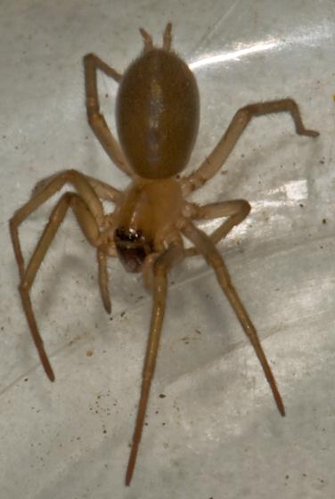Ground Spider?