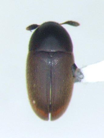 Colon - female
