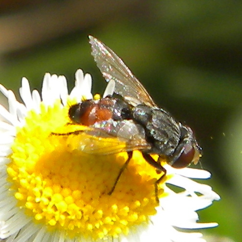 Satellite Fly?