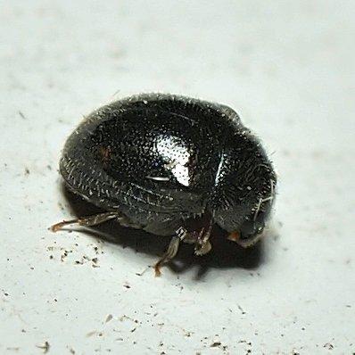 Bug Or Beetle?