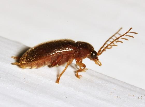 23may2012-col1 - Ptilodactyla