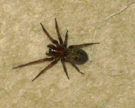 Please help i.d. this spider