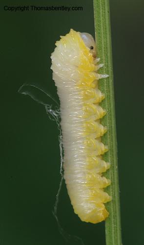Caterpillar - ID me