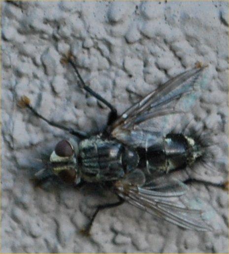 Neat Fly