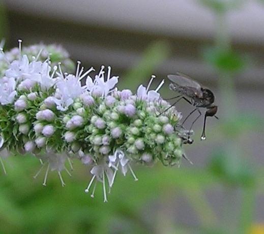 fly - Geron