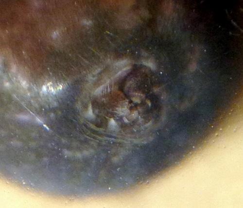 Amaurobius ferox? - Amaurobius ferox - female