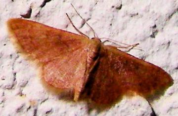 Moth # 07-188A