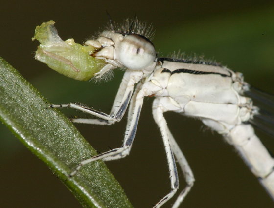 small green bug