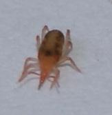 Arachnid?