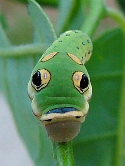 animal defenses Animal defenses (animal behavior) [christina wilsdon] on amazoncom free shipping on qualifying offers insects that look like leaves, snakes that play dead, fish.