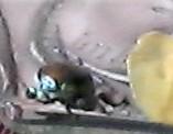 Beetle sitting on my begonias on 12th floor balcony