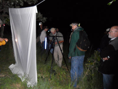 Night insect hunt with black light and bedsheet at Grinnell Insect Workshop.