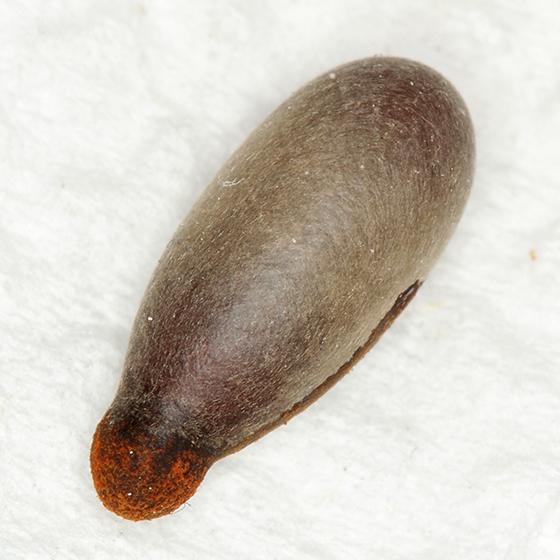 unknown cocoon