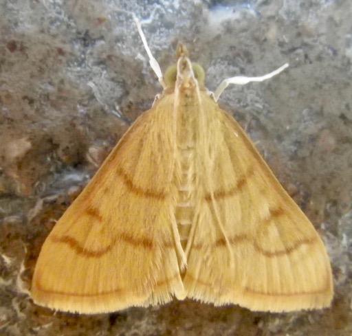 Moth B 8.20.18