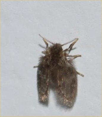 mothy - Psychoda